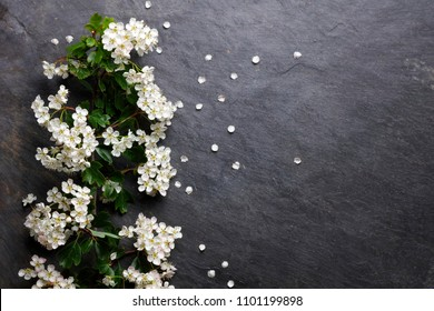 Early summer white  flower blossoms on slate with copy space