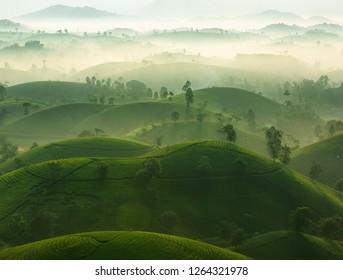 Early sunshine on Long Coc tea hill, Phu Tho