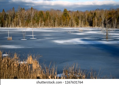 Early winter frozen lake at sunset with dead trees and bullrushes on Highway 37 and 7 in Tweed Ontario Canada
