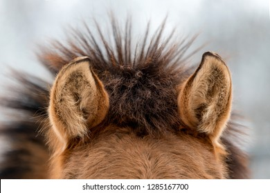 Ears brown horse close up