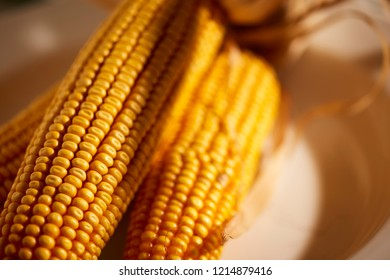 Ears of dried dent corn, sometimes called feed corn.