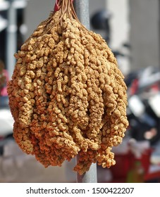 Ears of millet grain are hung up to dry
