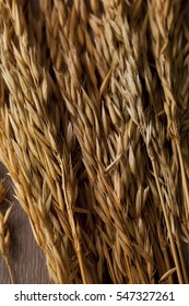 Ears of paddy rice on wood background