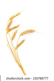 Ears of wheat. Isolated on a white background.