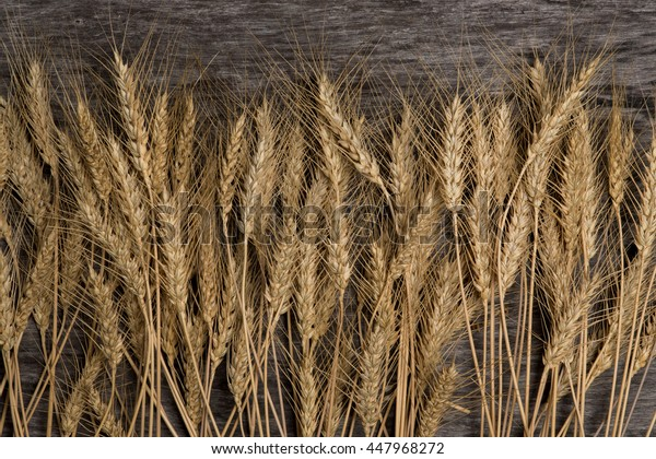 Ears of wheat on a background of old wood. Natural textures, background