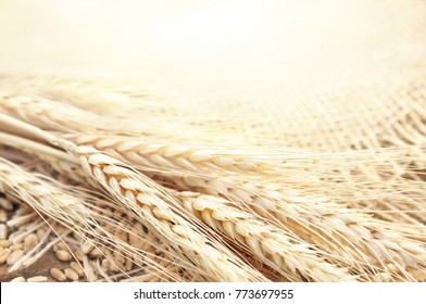 Ears of wheat on wooden background, selective focus, shallow DOF