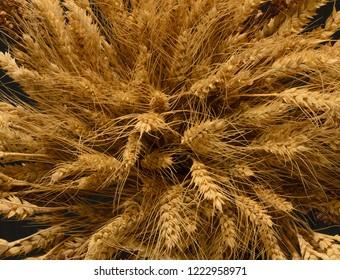 Ears of Wheat, rye, millet pshenici assembled in bouquet