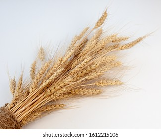 Ears of wheat. Sheaf, a bouquet of dried spikelet. Wheat isolated background.