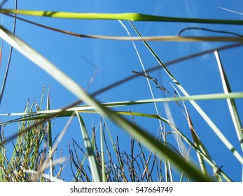Ears of wheat in a wild forest in the morning