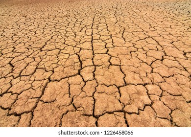The earth is cracked because of summer drought.