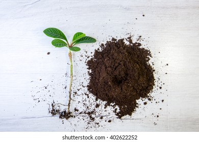 Earth day. Brown ground textured ground. Soil texture. Growing tree, save the world. The sprout reaches for the sky
