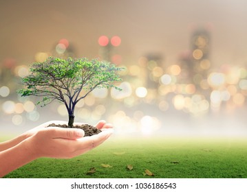 Earth day concept: Human hand holding big tree over city night background