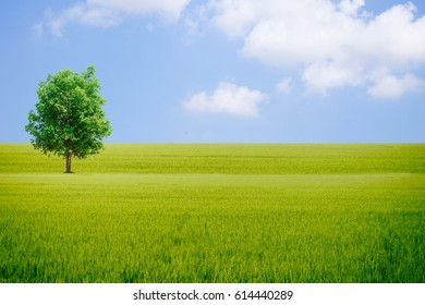 Earth day of Ecology concept and tree Grassy sky