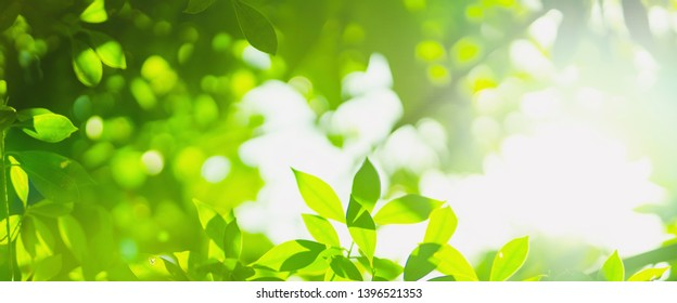 earth day and freshness environment conversation concept with sunshine on beauty green leaves in springtime and summer season with soft focus and bokeh background
