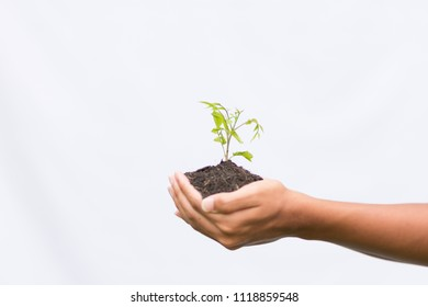 Earth Day In the hands of trees growing seedlings