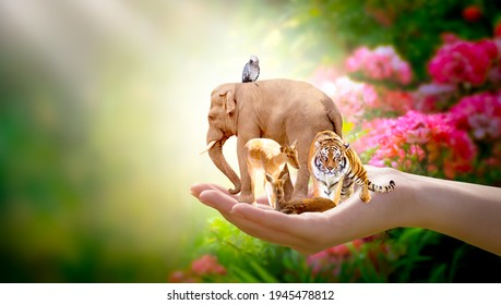 Earth Day, World Animal or Wildlife Day concept. Save our green planet, protect nature reserve, protection of endangered species and biological diversity. Elephant, tiger, deer, parrot in human hand.