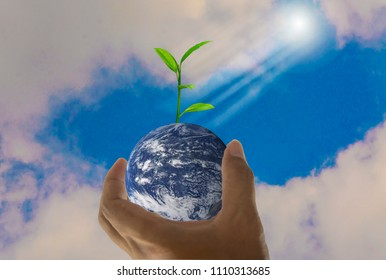 Earth, in a handful, with trees growing on top, With bright sky background and beam of light,Abstract concept  global warming worldwide, Elements of this image furnished by NASA (photo manipulation)