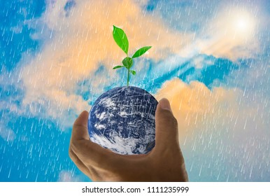 Earth, in a handful, with trees growing on top, With bright sky background and rain, Abstract concept  global warming worldwide, Elements of this image furnished by NASA (photo manipulation)