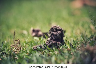 Earthworm Faeces with Selective Focus amid Grasses on Ground in Horizontal Orientation