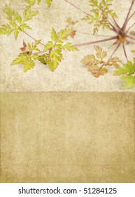 earthy background texture with floral elements