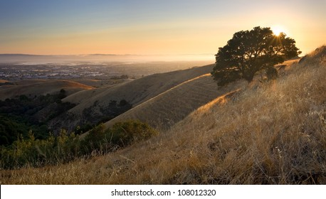 East Bay (San Francisco Bay Area) from above in the hills at sunset in summer