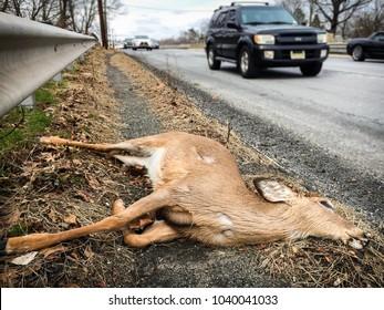East Brunswick, NJ - March 3, 2018: dead deer on side of road; cars pass roadkill on highway.