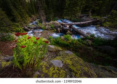 East Fork Dallas Creek Mt. Sneffels Wilderness area near Blue Lakes Trail