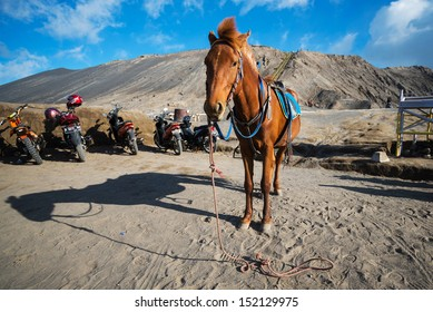 EAST JAVA,INDONESIA-MAY 05 :Horse for tourist rent at Mount Bromo volcanoes in Bromo Tengger Semeru National Park on May 05,2013 in East Java, Indonesia.