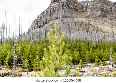 East Kootenay/British Columbia/Canada - Jun 02 2018: Native vegetation in Marble Canyon