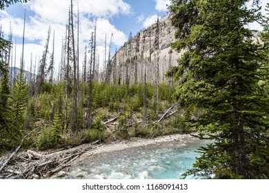East Kootenay/British Columbia/Canada - Jun 02 2018: Partial view of the Vermilion River inside the Marble Canyon