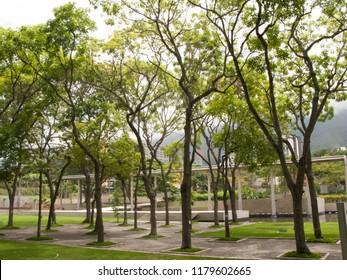 East Park officially Generalisimo Francisco de Miranda famous Parque del Este in Caracas Venezuela a public recreation park located in the Sucre Municipality of Metropolitan Caracas