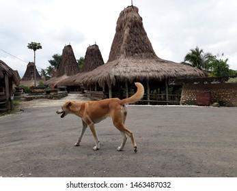 East Sumba/Indonesia - April 26 2019: traditional tenun in east Sumba, local people, costom home, heritage
