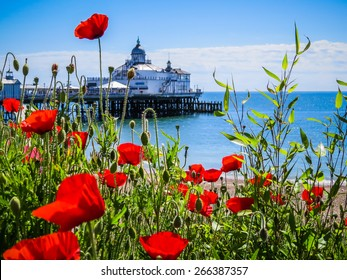 Eastbourne's pier and poppies on the seashore, East Sussex, England