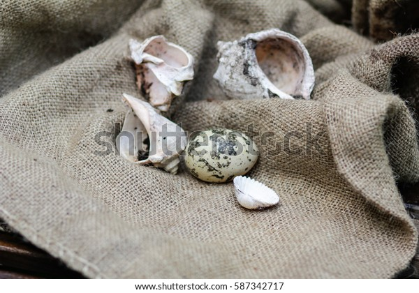 Easter background. Closeup quail egg and shells on the background of sackcloth