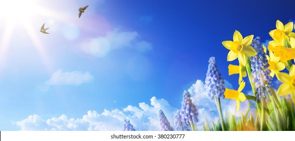 Easter background with fresh spring flowers