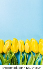 Easter background with yellow tulips over blue. Greeting card for mother's day. Copy space. Flat lay
