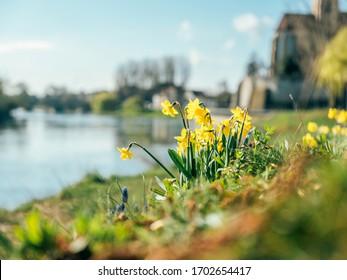 Easter bells in spring, near Stuttgart