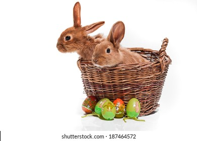 Easter Bunny.  Easter Bunny in the basket.