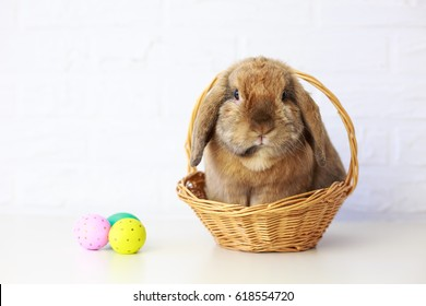 Easter Bunny in Basket with Easter Eggs. White Brick Wall Background. Shallow Depth of Field. Fluffy Brown Lop-Eared Rabbit. Copy Space.