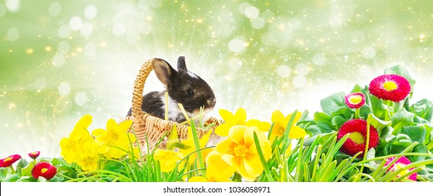 Easter Bunny basket, Easter lawn in front of Bokeh, banner