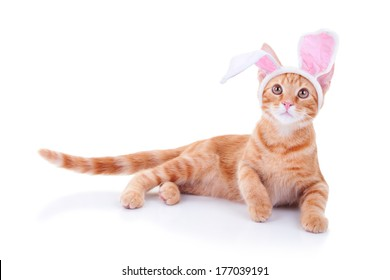 Easter bunny cat in bunny ears isolated on white