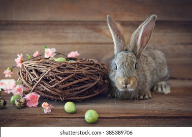 easter bunny  with easter eggs and a nest