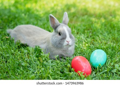 Easter bunny and Easter eggs on spring green grass. Cute rabbit. egg hunt with pet bunny.