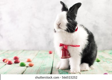 Easter bunny with  eggs on wooden background. easter concept