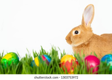 Easter bunny in green grass with painted eggs on white background