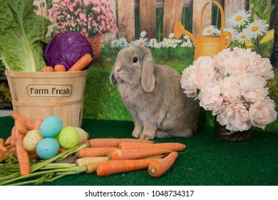 Easter bunny lop ear rabbit sitting up with carrots and spring flowers