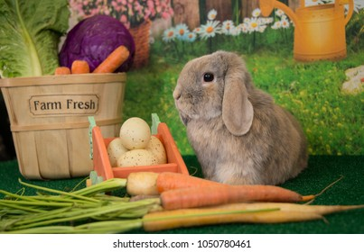 Easter bunny lop eared rabbit sitting up with carrots and spring flowers