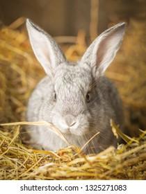 Easter bunny outdoor