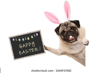 Easter bunny pug puppy dog with ears, eggs and blackboard with text happy easter, sideways from white banner