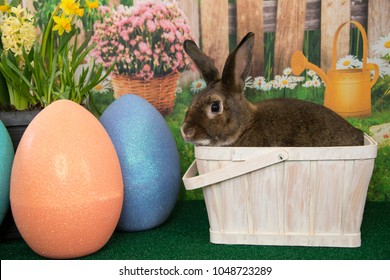 Easter bunny rabbit in basket with colored eggs and blooming spring flowers